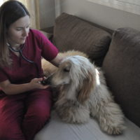 animal-salut-veterinario-domicilio-mireia-badia-enzo -3