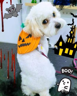 ponloguau halloween animal salut veterinario barcelona (2)