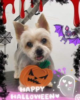 ponloguau halloween animal salut veterinario barcelona (3)
