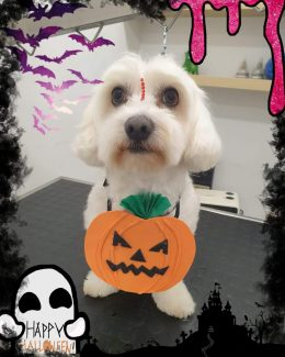 ponloguau halloween animal salut veterinario barcelona (4)