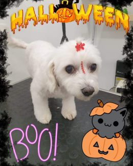 ponloguau halloween animal salut veterinario barcelona (5)