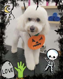 ponloguau halloween animal salut veterinario barcelona (6)