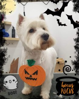 ponloguau halloween animal salut veterinario barcelona (7)