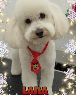 animal salut navidad 2019 ponloguau (13)